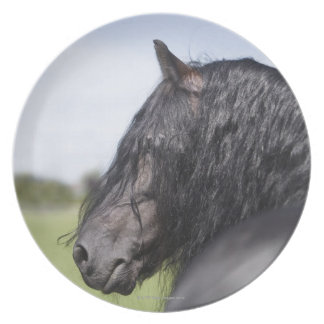 portrait of black horse with long mane plate