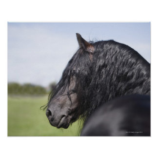 portrait of black horse with long mane poster