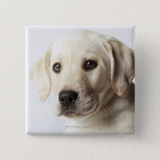 Portrait of blond Labrador Retriever Puppy 15 Cm Square Badge
