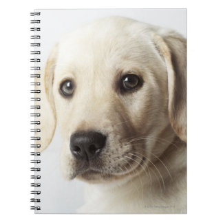 Portrait of blond Labrador Retriever Puppy Notebook