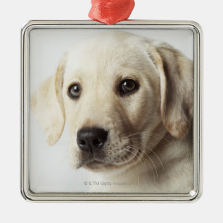 Portrait of blond Labrador Retriever Puppy Silver-Colored Square Decoration