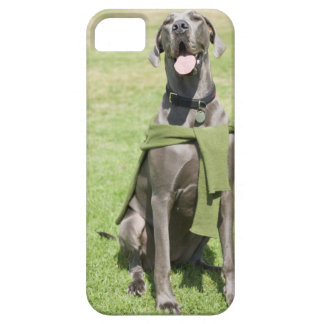 Portrait of Blue Great Dane iPhone 5 Case