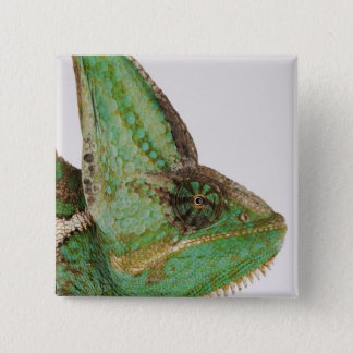 Portrait of boldly colored Yemen chameleon 15 Cm Square Badge