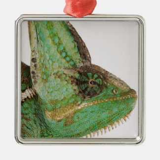 Portrait of boldly colored Yemen chameleon Christmas Ornament