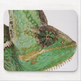 Portrait of boldly colored Yemen chameleon Mouse Mat