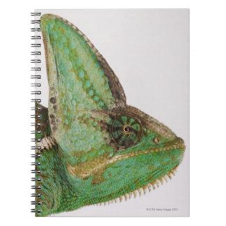 Portrait of boldly colored Yemen chameleon Notebooks