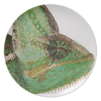 Portrait of boldly colored Yemen chameleon Plate