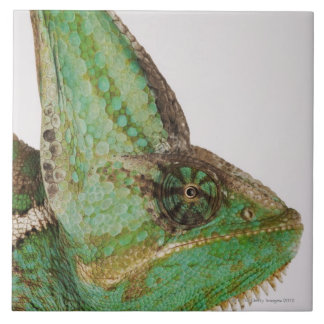 Portrait of boldly colored Yemen chameleon Tile