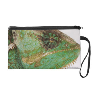 Portrait of boldly colored Yemen chameleon Wristlet