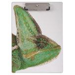 Portrait of boldly coloured Yemen chameleon Clipboard