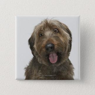 Portrait of Briard dog 15 Cm Square Badge