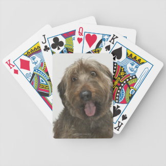 Portrait of Briard dog Bicycle Playing Cards