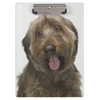 Portrait of Briard dog Clipboard
