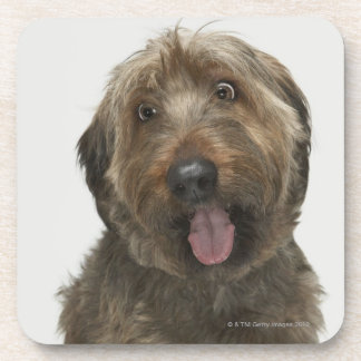 Portrait of Briard dog Coaster