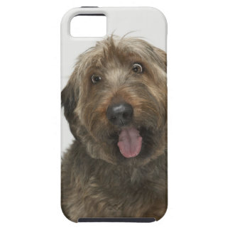 Portrait of Briard dog iPhone 5 Cover