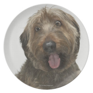 Portrait of Briard dog Plate