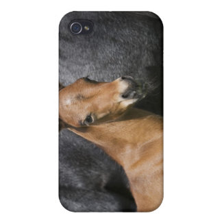 portrait of brown foal iPhone 4/4S cases
