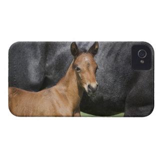 portrait of brown foal iPhone 4 case