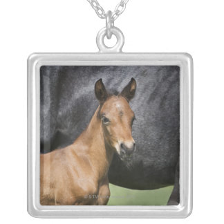 portrait of brown foal silver plated necklace