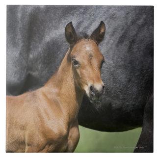 portrait of brown foal tile
