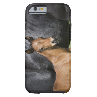 portrait of brown foal tough iPhone 6 case