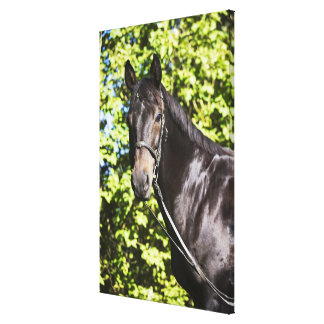 portrait of brown horse 2 canvas print
