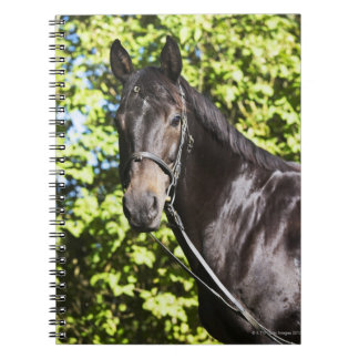 portrait of brown horse 2 notebook