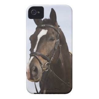 portrait of brown horse iPhone 4 cover