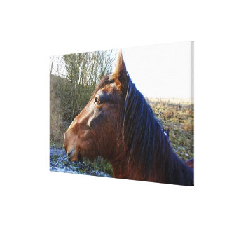 Portrait of brown horse on cold day staring into canvas print