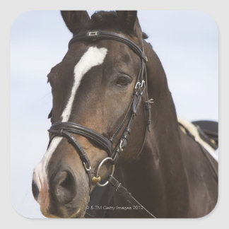 portrait of brown horse square sticker