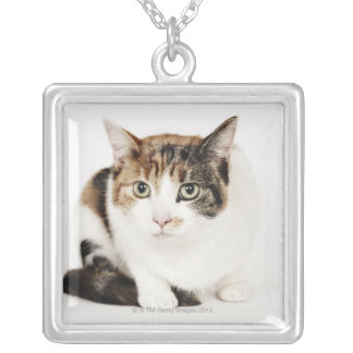 Portrait of Calico cat Silver Plated Necklace