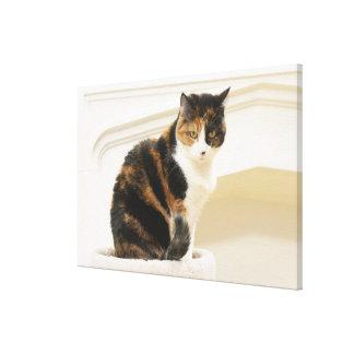 Portrait of cat 3 canvas print