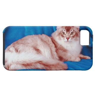 Portrait of cat 3 case for the iPhone 5