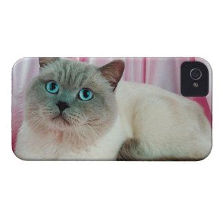 Portrait of cat 4 iPhone 4 cover