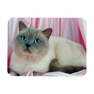 Portrait of cat 4 rectangular photo magnet