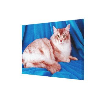 Portrait of cat 5 canvas print