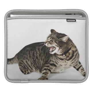 Portrait of cat hissing iPad sleeve