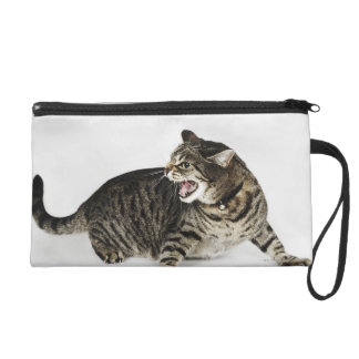 Portrait of cat hissing wristlet
