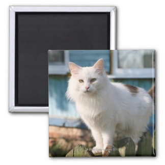 Portrait of cat on fence square magnet