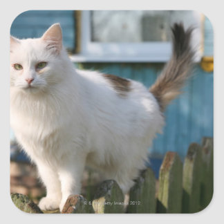 Portrait of cat on fence square sticker