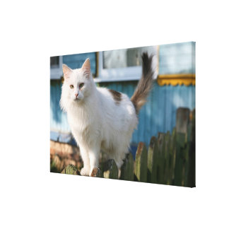 Portrait of cat on fence stretched canvas print