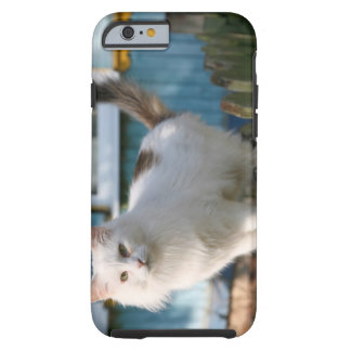 Portrait of cat on fence tough iPhone 6 case