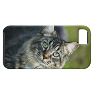 Portrait of cat outdoors iPhone 5 cases