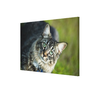 Portrait of cat outdoors stretched canvas prints