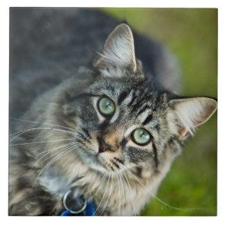 Portrait of cat outdoors tile