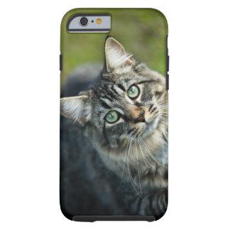 Portrait of cat outdoors tough iPhone 6 case