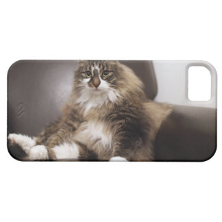 Portrait Of Cat Sitting In Chair Barely There iPhone 5 Case