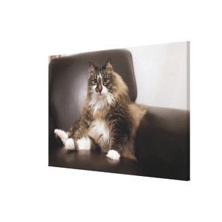 Portrait Of Cat Sitting In Chair Canvas Print