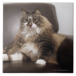 Portrait Of Cat Sitting In Chair Large Square Tile