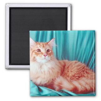 Portrait of cat square magnet